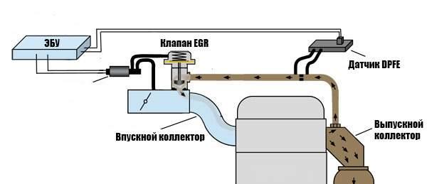 EGR-dpfe