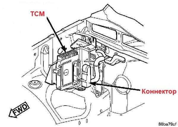 расположение TCM